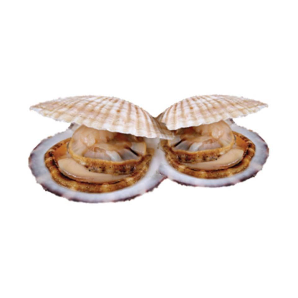 หอยเชลล์ติดเปลือกสดโดย FP