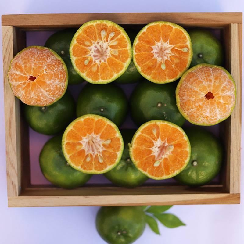 ส้มสายน้ำผึ้ง ธิดาออเรนจ์ 5 กิโล / 1 กล่อง